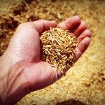 Despre cea mai veche rețetă de pâine din Transilvania